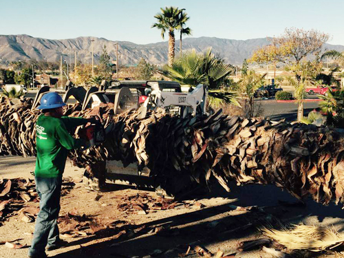 http://www.zerolimitdev.com/wctreeservice/wp-content/uploads/2015/06/Palm-Tree-Removal-in-Temecula-small.jpg